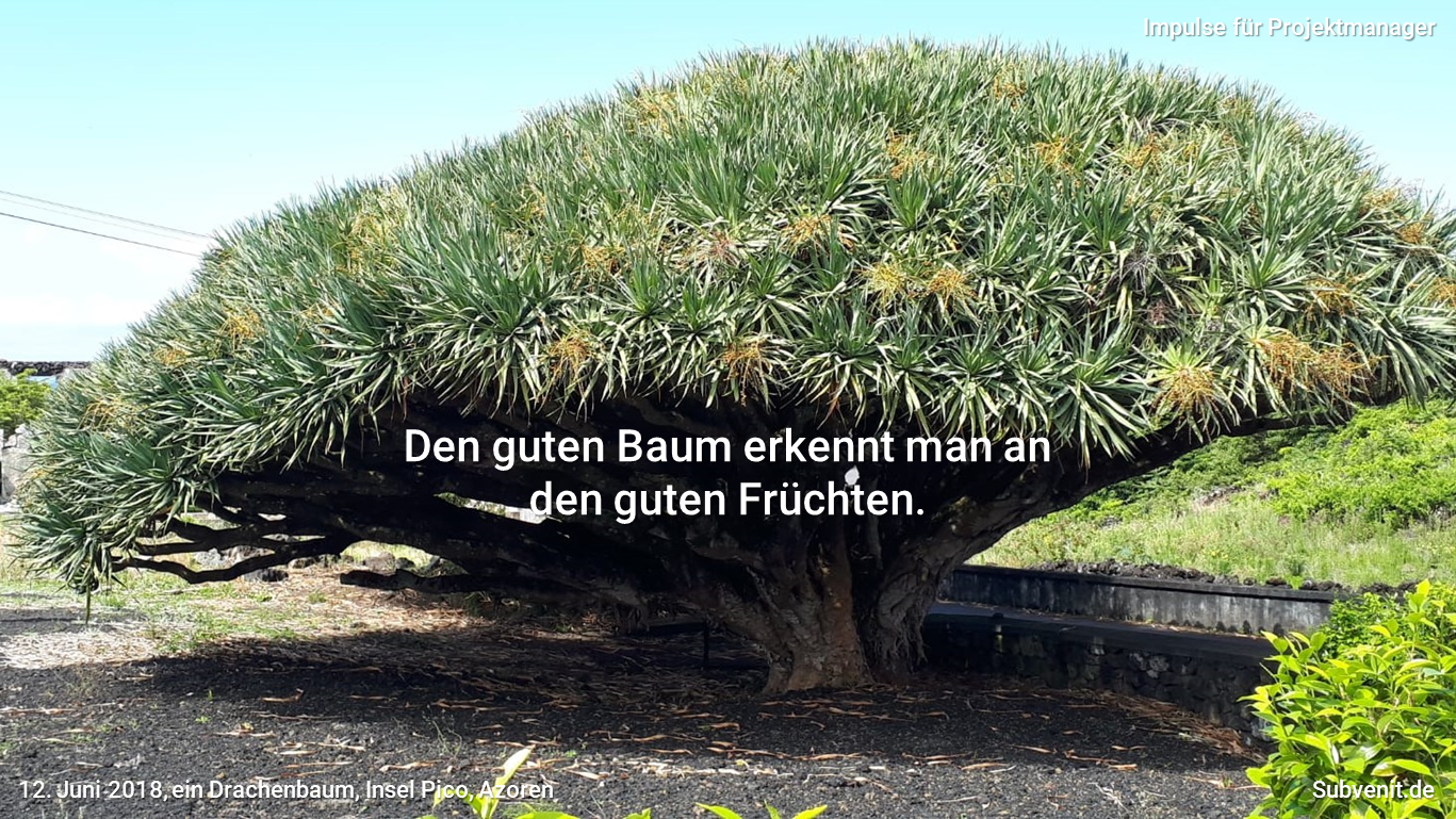 Den guten Baum erkennt man an den guten Früchten